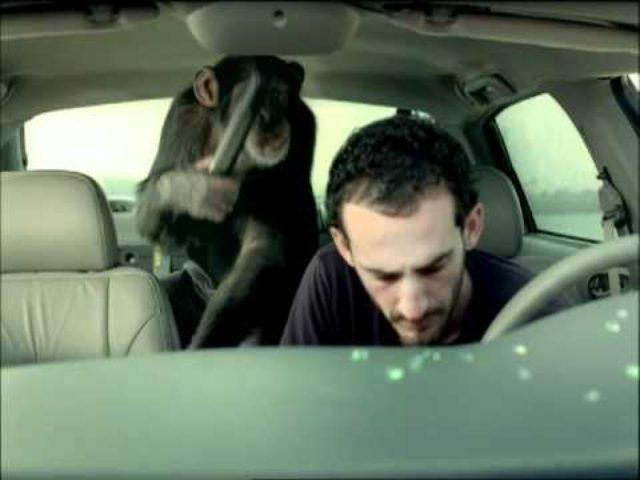 画像: Bridge Trunk Monkey Commercial youtu.be