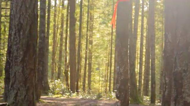 画像: ロケーションは静かな林の中・・・。 www.youtube.com