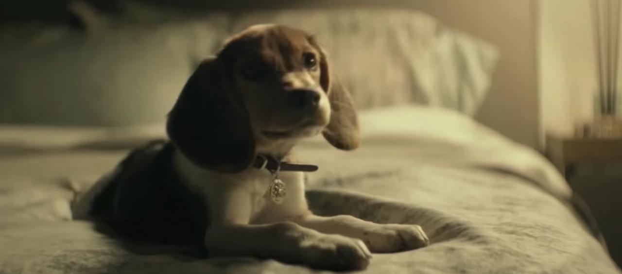 画像: 妻からの最後のプレゼントの愛犬をも奪われる・・・ johnwick.jp