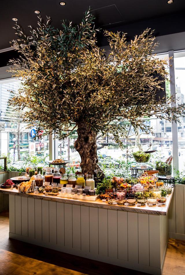 画像: 店内のサラダバー。オリーブの木が目印!