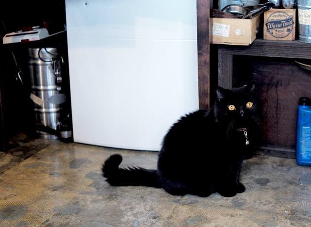 画像: お店で飼われている猫ちゃん