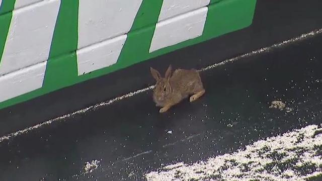 画像: Rabbit stops trucks practice at Bristol Motor Speedway youtu.be