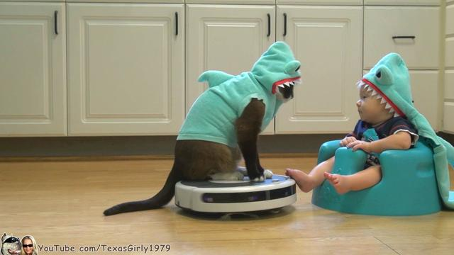 画像: #SharkCat Entertains #SharkBaby! Happy #SharkWeek!!! | TexasGirly1979 youtu.be