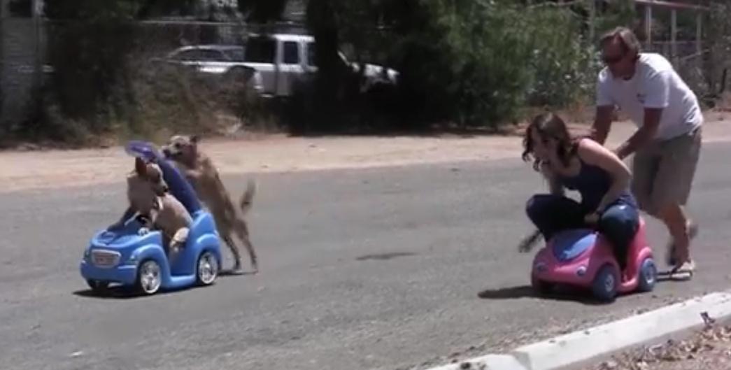 画像: 【勝つのはどっち!?】犬vs人間!手押し車レース!