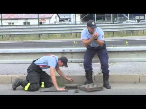 画像: スロヴァキア警察、カモの親子を助ける! youtu.be