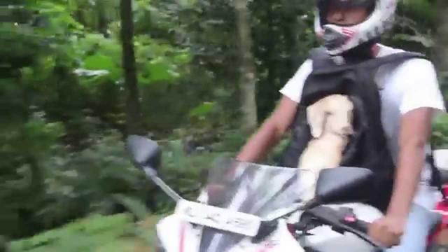 画像: This man gave his baby goat a wonderful ride youtu.be