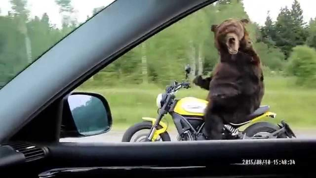 画像: Ours conduit une moto en Russie youtu.be