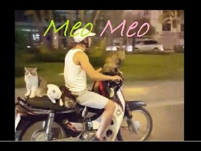 画像: Vietnamese man bring four cats on his motorbike youtu.be