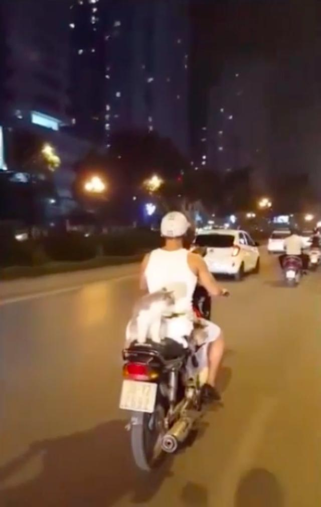 画像: ベトナムで人気のスーパーカブ・タイプのアンダーボーン・モーターサイクルが、夜の街を走ります・・・ん? なんだか後ろにネコが載っていますね・・・。 www.youtube.com