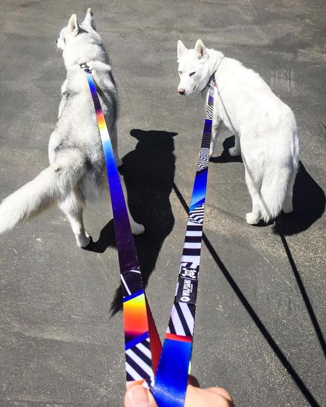 画像3: 「ラリーカー」×「犬」!? あの『ケン・ブロック』と『ウルフギャング』のコラボモデルが登場!