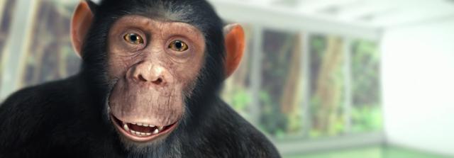 画像: チンパンジーを驚かせ、喜ばせたものとは? www.youtube.com