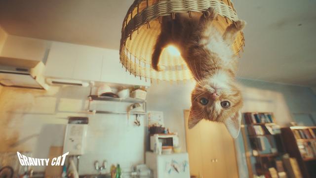 画像: #重力猫『GRAVITY CAT / 重力的眩暈子猫編』presented by GRAVITY DAZE 2 www.youtube.com