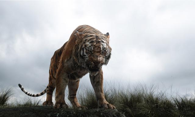 画像: シア・カーン ジャングルに現れた、人間を憎悪する残忍なトラ。人間の脅威を知る彼は、モーグリが成長すればジャングルの敵となると考え、人間への復讐心をモーグリに向け、命を狙う。 www.disney.co.jp
