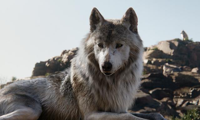 画像: ラクシャ 人間の赤ん坊・モーグリを我が子として迎え入れた、母オオカミ。モーグリを守るためなら相手がシア・カーンであろうとも、命懸けの覚悟を見せる。モーグリとの別れを深く悲しむ。 www.disney.co.jp