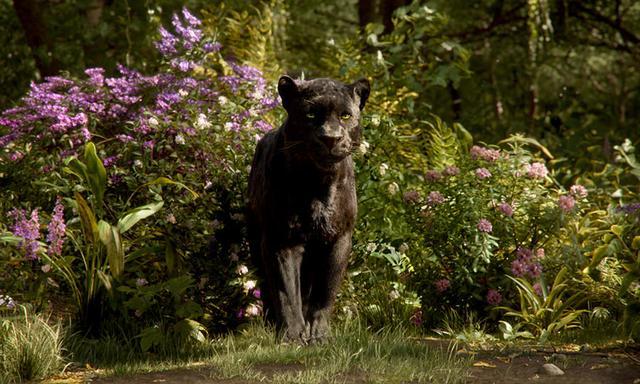 画像: バギーラ モーグリの守護者ともいうべき、威厳に満ちた黒ヒョウ。勇敢で規則を重んじ、理性的。赤ん坊のモーグリを発見し救い、自然の厳しさや生き抜く知恵を教え、鍛え導いてきた。 www.disney.co.jp