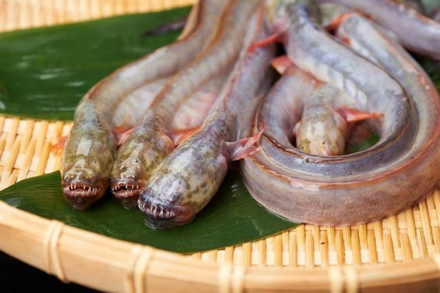 画像: わらすぼ :ムツゴロウと並ぶ有明海の珍魚。 目は退化し、 うろこもほとんどなくぬるぬるしている。 内臓をとって丸ごと干物にして食すことが多いが、 刺身、 味噌汁として食されることもある。