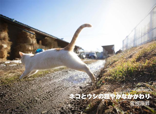 画像: カメラマン 2018カレンダーシリーズ 33 曽根原昇「ネコとウシの穏やかなかかわり」|モーターマガジン社の通販本店サイト