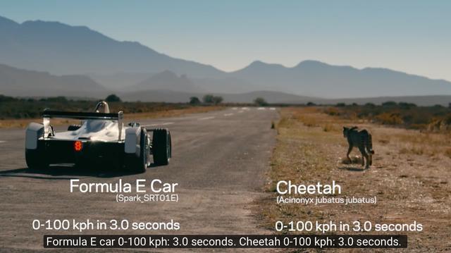 画像: 舞台は南アフリカ・・・なんと、フォーミュラEマシンもチーターも、なんと0-100km/h加速はともに3秒台なのですね・・・。これはいい勝負になりそうです! www.youtube.com