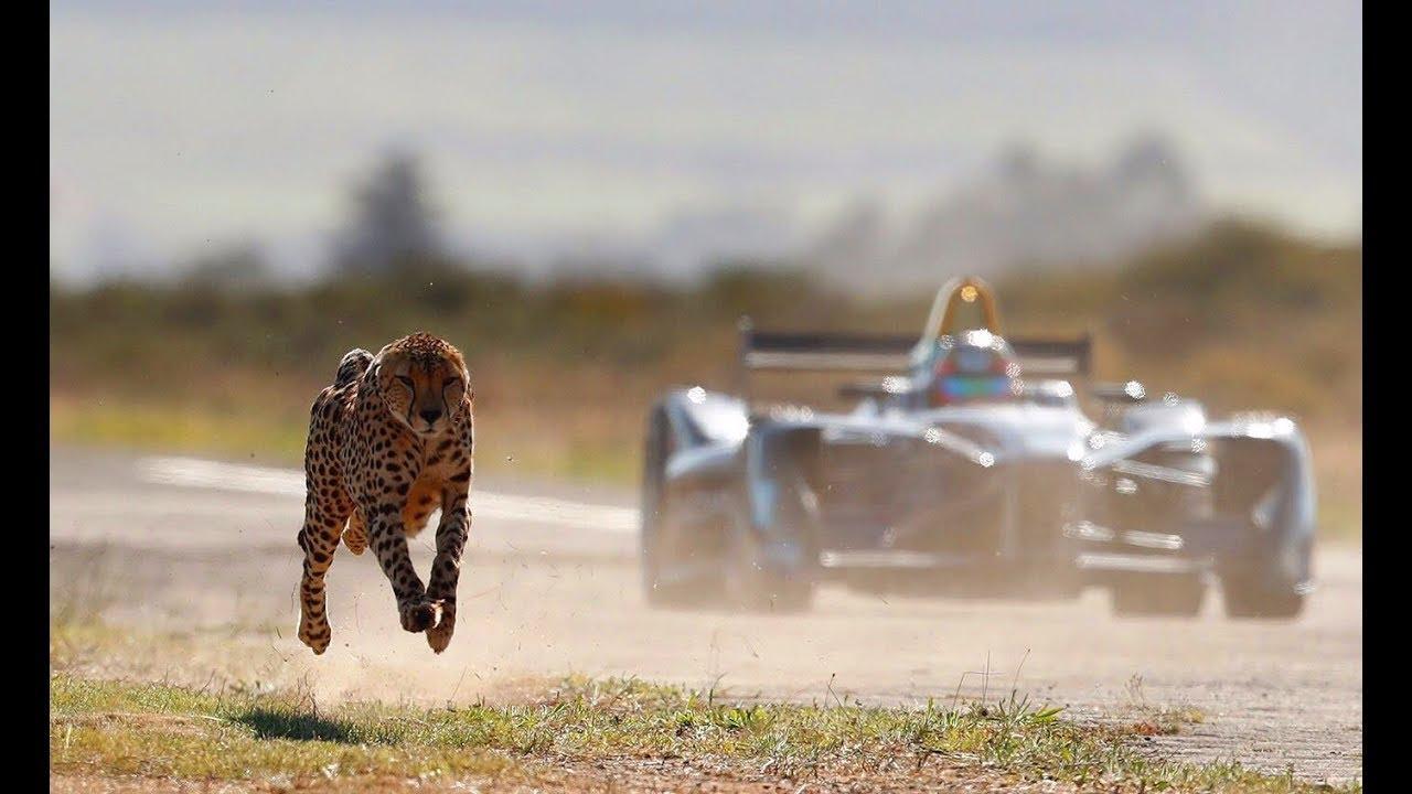 画像: Drag Race: Formula E Car vs Cheetah youtu.be