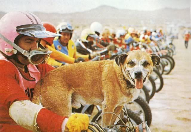 画像: 「レーシング犬」をご存知ですか? - LAWRENCE - Motorcycle x Cars + α = Your Life.