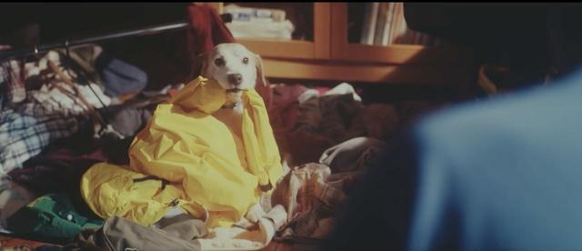 画像: 【二度見確実】一緒に出かけた記憶は、イヌにも残っている。心温まるムービー。 - LAWRENCE - Motorcycle x Cars + α = Your Life.