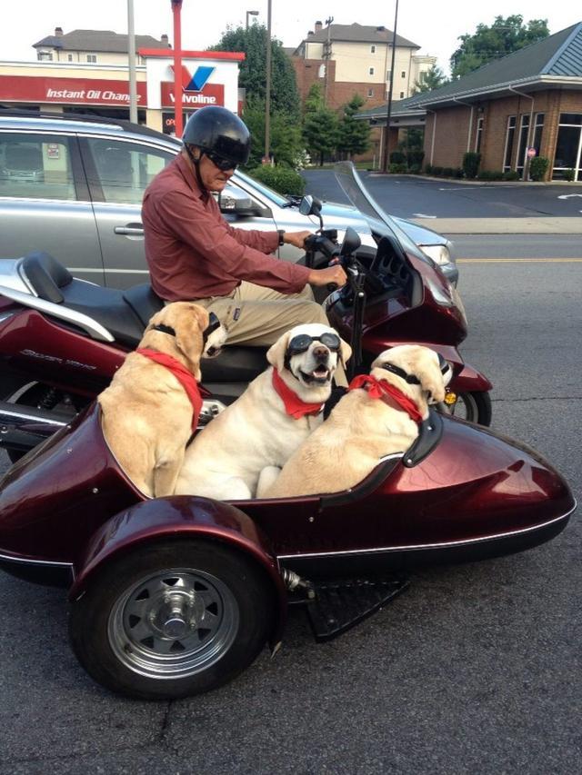 画像: 犬と一緒に、サイドカーを楽しむ! - LAWRENCE - Motorcycle x Cars + α = Your Life.