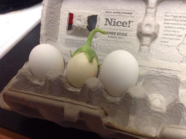 画像: 真ん中が「ホワイト・エッグプラント」です。その左右は鶏の卵です・・・念のため? en.wikipedia.org