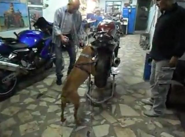 画像: 舞台は某所のワークショップ・・・。モーターサイクルが置いてありますけど、このワンちゃんは何をしようとしているのでしょうか・・・? www.facebook.com