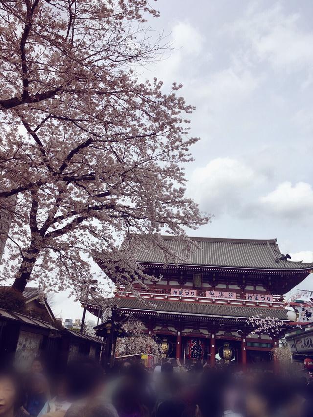 画像7: 春は桜とお酒とミク様♡お花見の計画はお早めに〜!!【水曜日のミク様】