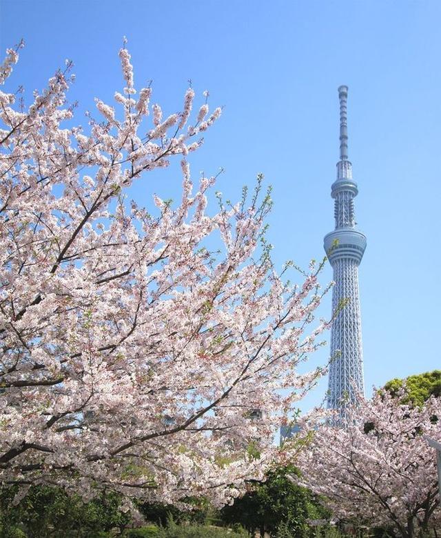 画像: 画像提供:墨田区観光協会 hanami.walkerplus.com