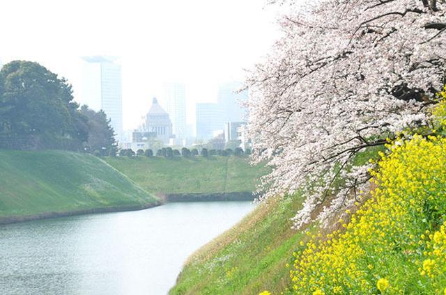 画像: 画像提供:千代田区観光協会 hanami.walkerplus.com