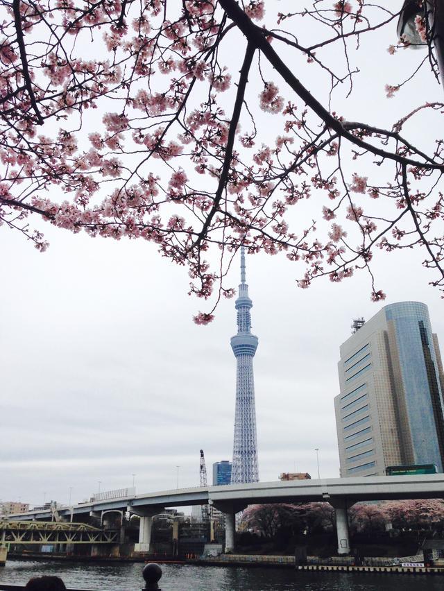画像3: 春は桜とお酒とミク様♡お花見の計画はお早めに〜!!【水曜日のミク様】