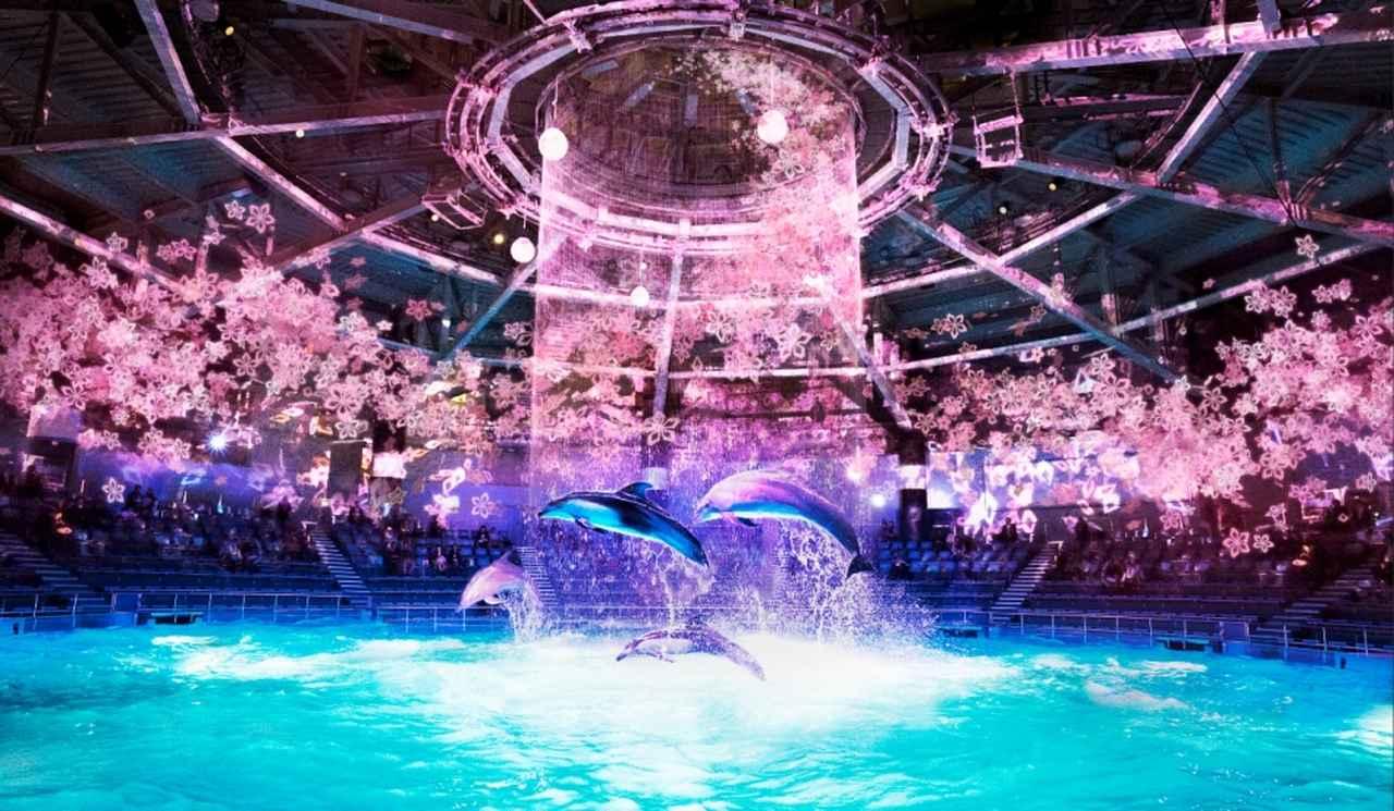 画像: 「桜語り(さくらがたり)」 デジタルアートで描く情緒ある桜の美しさと、イルカたちの躍動を合わせたパフォーマンス☆ www.aqua-park.jp