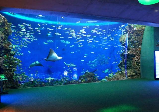 画像: ステイ先の無限の海 大水槽