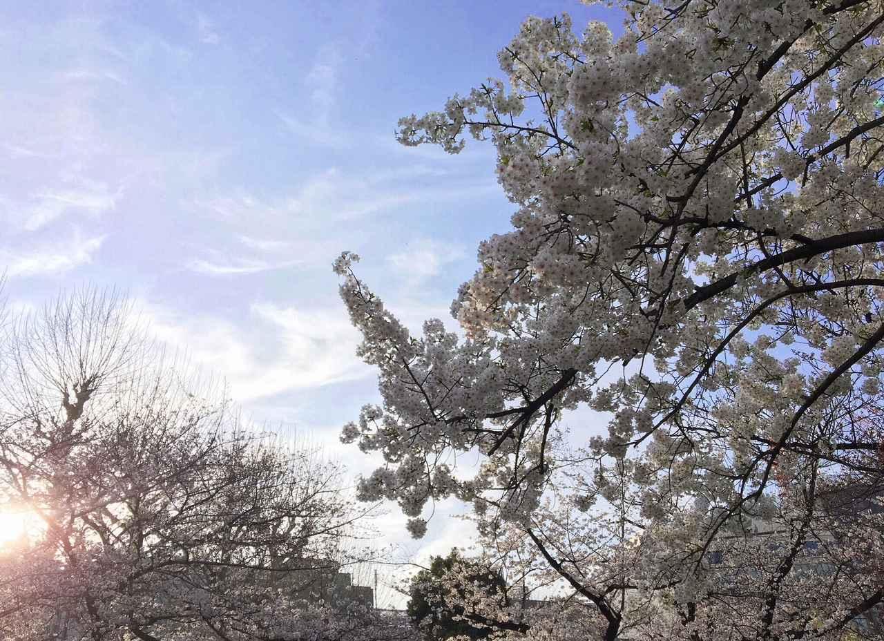 画像: 空と桜〜!加工なしでこの綺麗さ☆