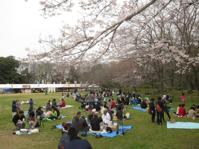 画像: シートもOKなので、《佐倉城址のさくら》期間中は、 桜を眺めながらピクニック気分で!