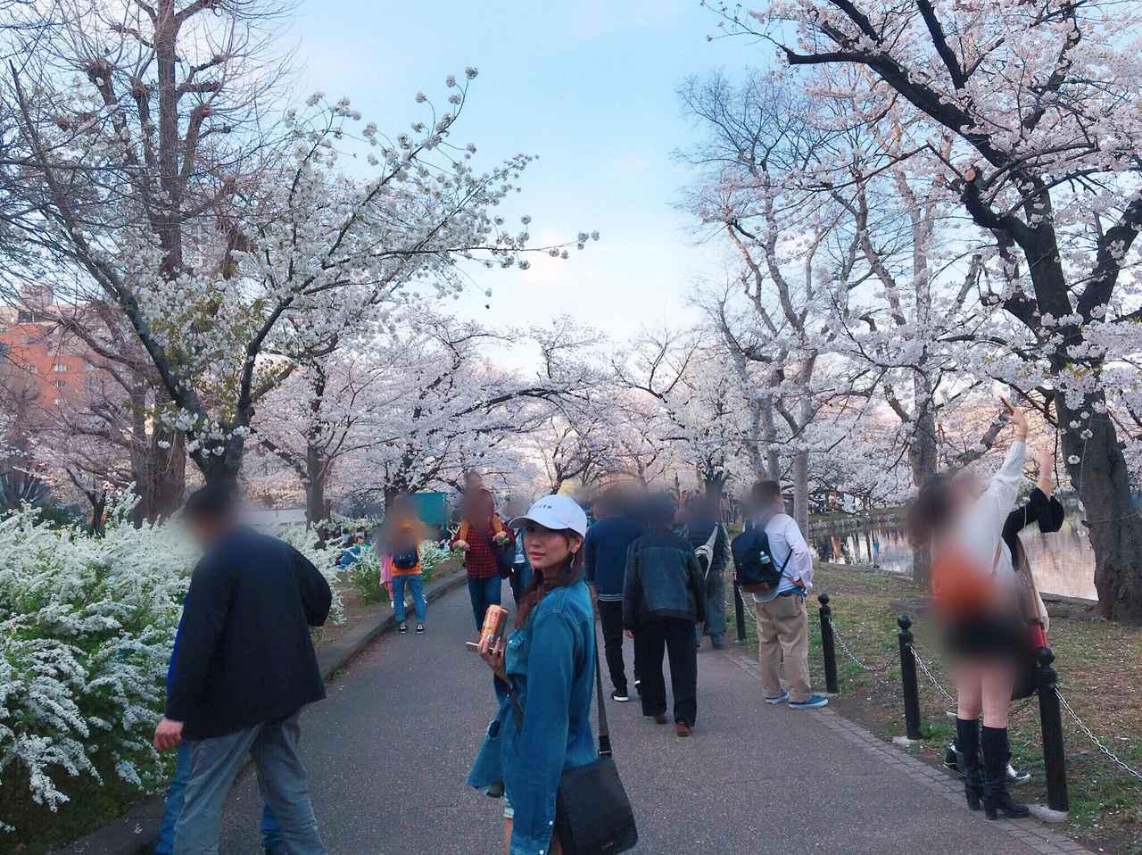 画像: 見頃の桜がいっぱい!