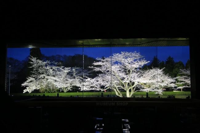 画像: 【圧巻】日本100名城に咲く千本桜!「夜桜びょうぶ」は行く価値超アリ