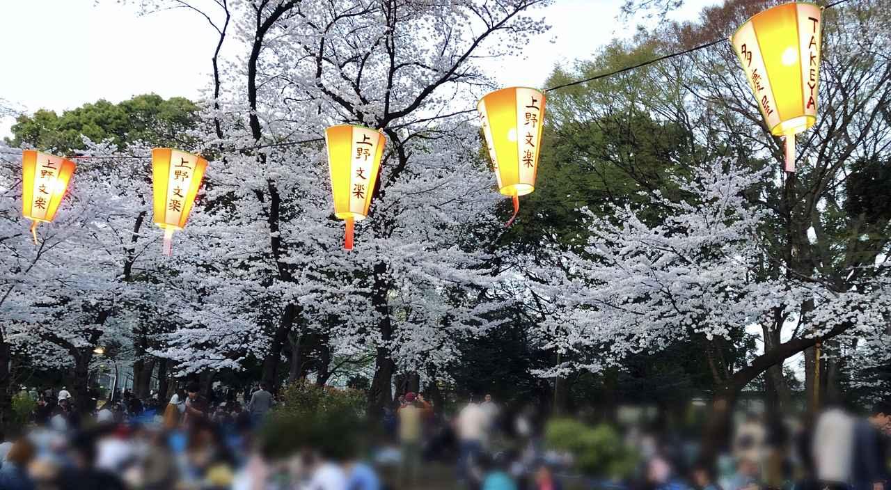画像8: ミク様は花より団子!?今年初のお花見は◯◯へ行ってきました♡【水曜日のミク様】