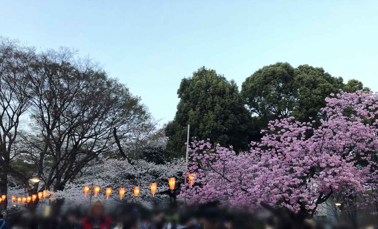 画像10: ミク様は花より団子!?今年初のお花見は◯◯へ行ってきました♡【水曜日のミク様】