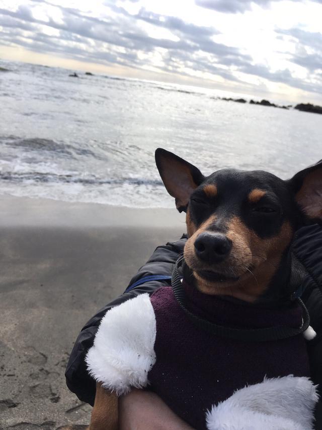 画像15: 行くなら今!ミク様的『愛犬と行く旅行』オススメスポットをご紹介〜☆【水曜日のミク様】