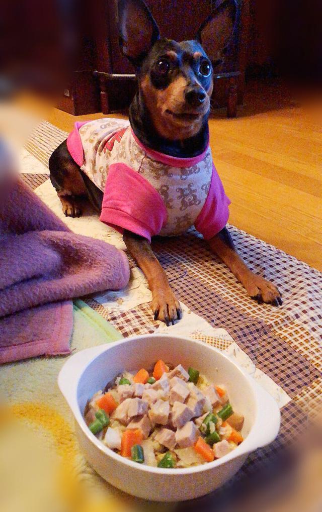 画像: いつもより豪華なご飯にキョトン顔。笑 でも美味しそうに食べてました♡