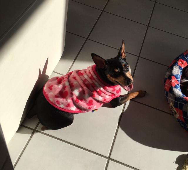 画像10: 行くなら今!ミク様的『愛犬と行く旅行』オススメスポットをご紹介〜☆【水曜日のミク様】