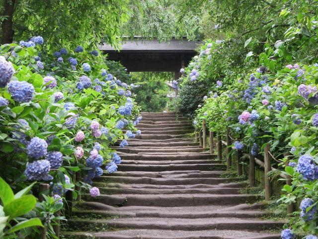 画像: あじさいが境内を囲むように咲いてます☆ www.jalan.net