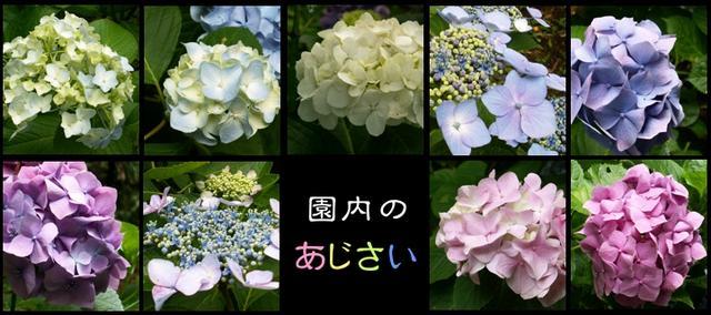 画像: www.sankeien.or.jp