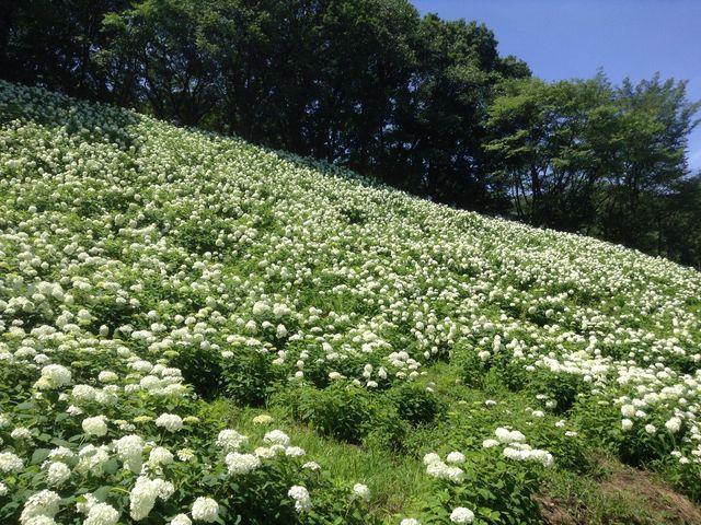 画像: 真っ白で本当に雪山みたい♡ www.jalan.net