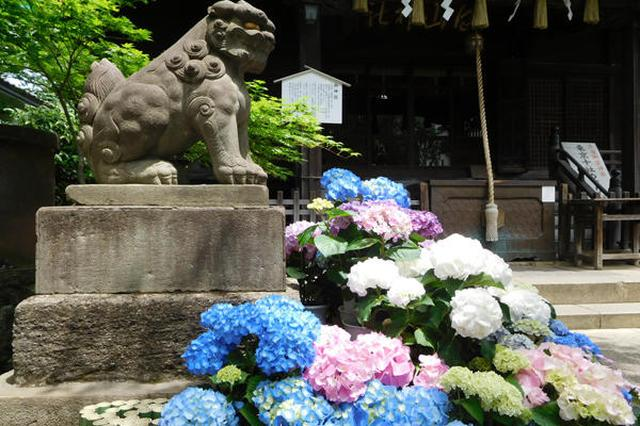 画像: すぐに沢山のあじさいが♡ www.enjoytokyo.jp