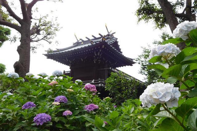 画像: あじさいに囲まれた神社も素敵 www.enjoytokyo.jp