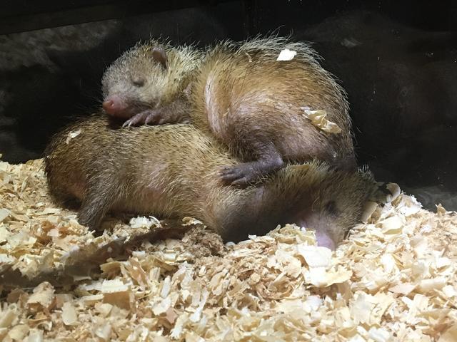画像: 重なって寝てる。癒される。。これだけ名前分からない。。