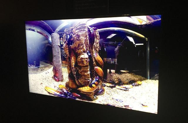 画像2: 閲覧注意♡「キモかわいい展」でご対面した貴重動物の正体とは?【水曜日のミク様】